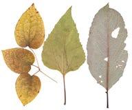 Große Blätter von verschiedenen Blumen und von Bäumen Stockfotografie