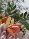 Große Blumen lizenzfreie stockfotografie
