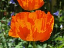Große Blumen im Garten Stockfotos
