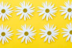 Große Blumen von Gänseblümchen auf einem gelben Hintergrund Lizenzfreies Stockbild