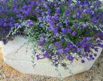 Große Blumenwanne Stockfotos