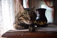 Große braune Katze, Katze auf dem Tisch stockfotografie