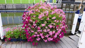 Große dekorative Blumen auf der Flussbank in Amsterdam Lizenzfreies Stockfoto