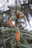Große Details! Blätter abgedeckt mit Frost, Abschluss oben Stockfoto