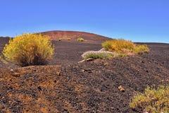 Große dunkel-blaue Lava und Aschefeld mit blühenden gelben Teide-Anlagen stockfoto