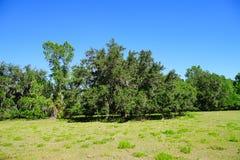Große Eiche in Florida Lizenzfreies Stockfoto