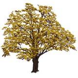 Große Eiche mit Gelb verlässt im Farbvektorbild Lizenzfreies Stockbild