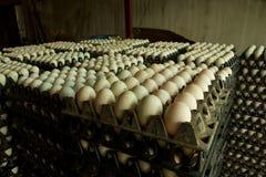 Große Eier Stockbilder