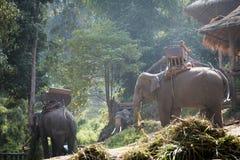 Große Elefanten, die Gras nahe dem Häuschen essen Lizenzfreie Stockbilder