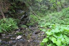 Große Falkeschlucht, slowakisches Paradies, Slowakei Stockfotos
