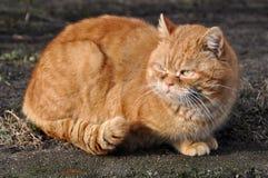 Große Garfield-Katze stockfotos