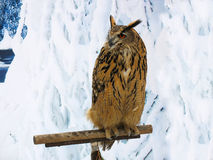 Große gehörnte Eule auf einem Support über Schneehintergrund Lizenzfreies Stockbild