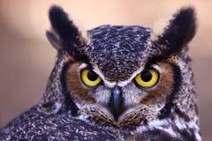 Große gehörnte Eule - wachsame Augen Lizenzfreies Stockfoto