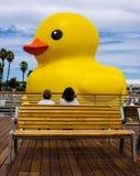 Große gelbe Ente lizenzfreie stockfotografie