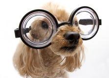 Große Gläser Lizenzfreies Stockfoto