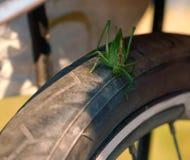 Große grüne Heuschrecke sitzt auf einer Fahrradfelge, Heuschrecke sitzt auf einem Fahrradreifen Lizenzfreies Stockfoto