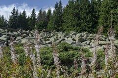 Große Granitsteine des einzigartigen Steinflusses auf felsigem Fluss im Nationalpark-Berg Vitoshas Lizenzfreie Stockfotografie