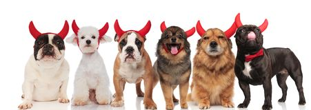 Große Gruppe glückliche stehende und sitzende Teufelhunde stockfotos
