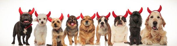 Große Gruppe Hunde, die Teufelhörner tragen lizenzfreie stockfotografie