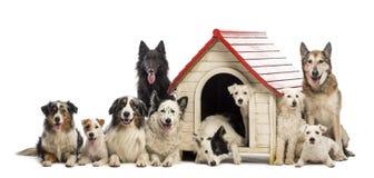 Große Gruppe Hunde innen und eine Hundehütte umgebend stockfotografie