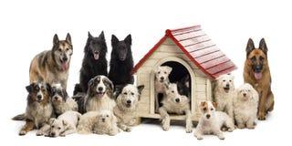Große Gruppe Hunde innen und eine Hundehütte umgebend stockbild