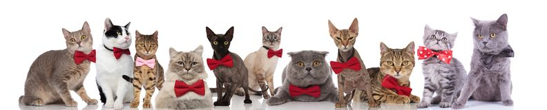 Große Gruppe nette Katzen, die bunte bowties tragen stockfoto