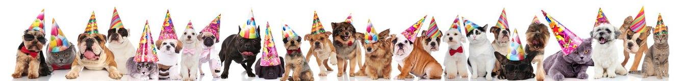 Große Gruppe nette Katzen und Hunde, die bunte Kappen tragen stockfoto