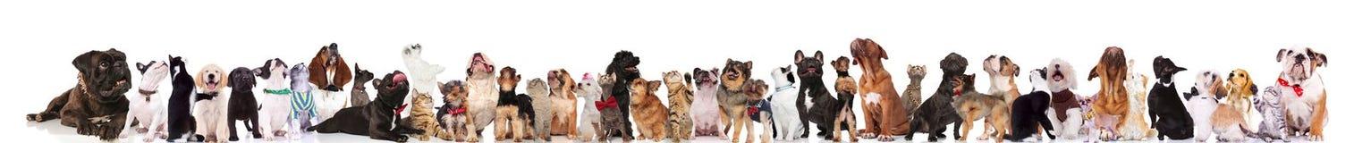 Große Gruppe neugierige Hunde und Katzen, die oben schauen lizenzfreie stockbilder