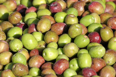 Große Gruppe Oliven lizenzfreie stockbilder