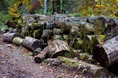 Große Gruppe Stumpfbrennholz lizenzfreie stockfotos