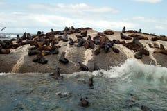 Große Gruppe Tiere lizenzfreies stockfoto