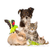 Große Gruppe Tiere Getrennt auf weißem Hintergrund stockbild
