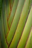 Große hellgrüne Blattnahaufnahme Lizenzfreies Stockbild
