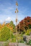 Große Herbstfarben stockfotos