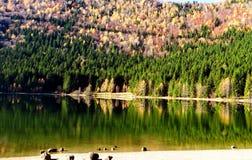 Große Herbstwaldreflexion Stockbild