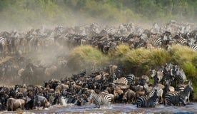 Große Herde des Gnus ist über Mara River Große Systemumstellung kenia tanzania Masai Mara National Park lizenzfreies stockfoto