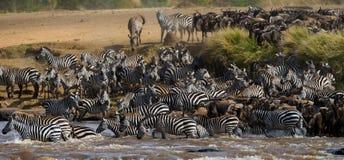 Große Herde des Gnus ist über Mara River Große Systemumstellung kenia tanzania Masai Mara National Park lizenzfreies stockbild