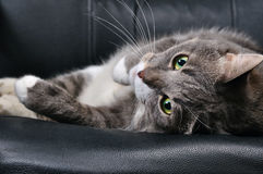 Große Katze Lizenzfreies Stockbild