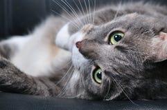 Große Katze Stockfotos