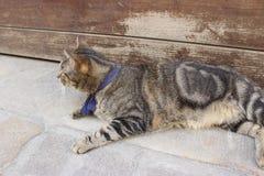 Große Katze liegt auf einer Straße Lizenzfreies Stockfoto