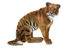 Große Katze-Tiger Stockbild