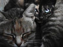 Große Katze und kleines Kätzchen Stockfoto