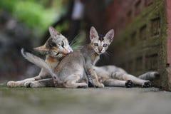 Große Katze und kleines Kätzchen Stockbild