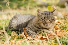 Große Katze von einem Schutz Stockbild