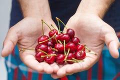 Große Kirschen in den Händen des Erntens lizenzfreie stockfotos