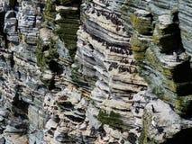 Große Kolonie von den verschiedenen Vogelspezies, die auf einer Seeklippe, Orkney-Inseln, Schottland stillstehen lizenzfreie stockfotos