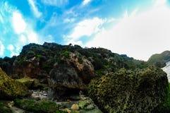 Große korallenrote Ansichten Stockfoto