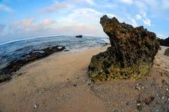 Große korallenrote Ansichten Stockfotos