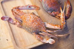 Große Krabbe essen mit Meeresfrüchtesoße Stockfoto