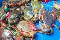 Große Krabben Stockbild